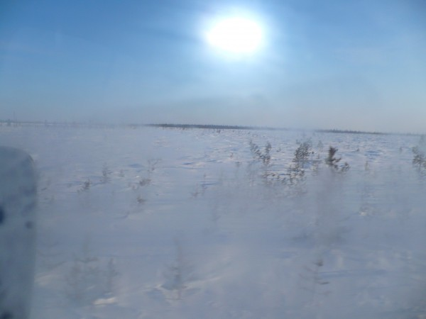 Картинки тундра летом и зимой